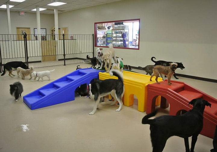 Doggy daycare peoria il my dog 39 s bakery daycare grooming for Best doggy day care