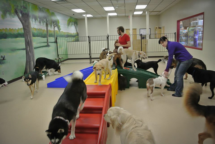 Dog Boarding Training Toronto
